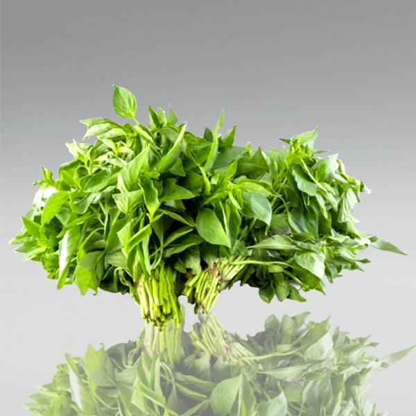 Kemangi - Scharfer Vietnamesischer Basilikum, 100g